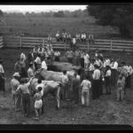 4-H dairy judging, Storrs, 1944