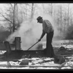 Maple sap boiling, Storrs, 1942