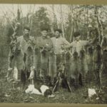 Hunting raccoons at Madison, 1900